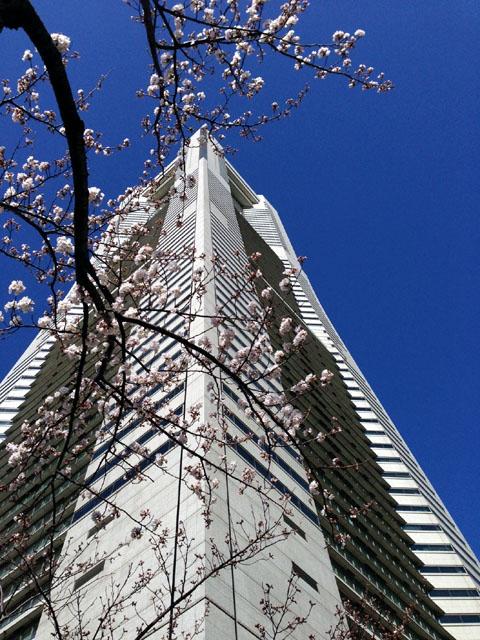 landmark_sakura